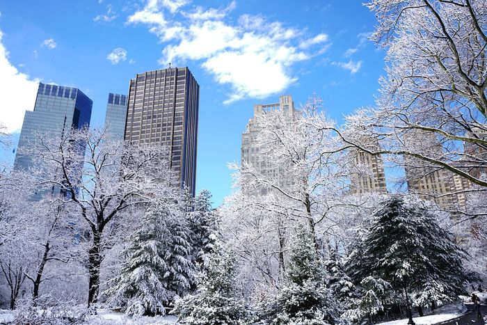 Central Park NYC NYC Photography Manhattan Snow Winter Eyemphotography