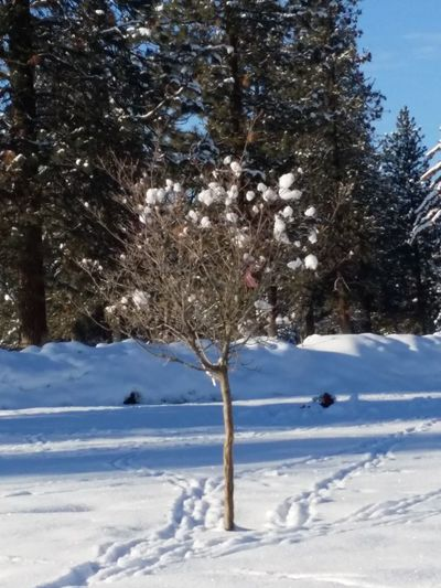 Spokane Wa SnowCollection Its Cold Outside Snow Covered Trees Tree_collection  Winter Wonderland EyeEm Around The World Snow Covered Landscape Ice And Snow Snow Showcase: January January 2016 Nature_collection Treescollection Tree Winter Day Winter_collection Winter