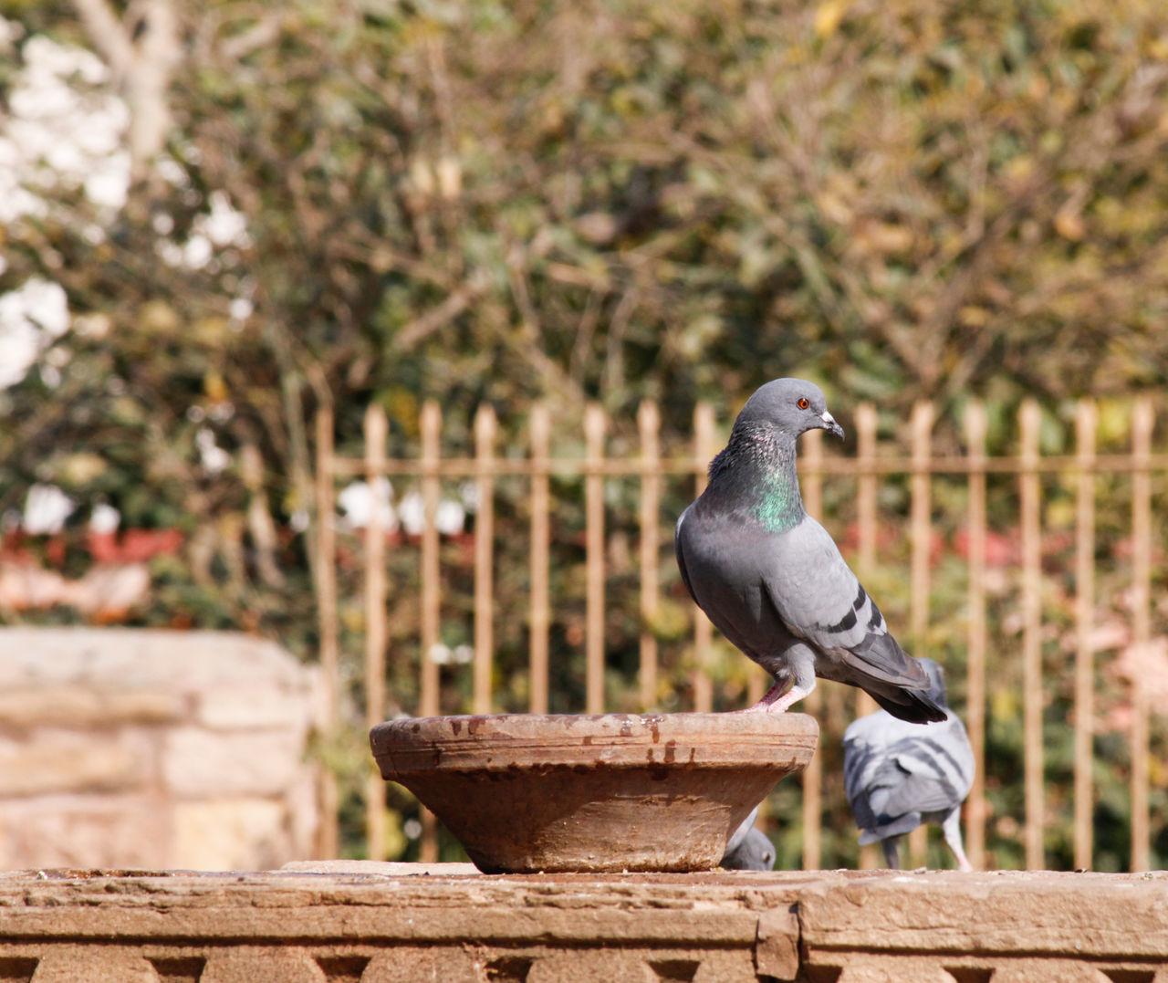 Bird Animal Themes Outdoors Perching Pigeons Pigeonslife Pigeon Pose Birdwatching Bird Photography Birds Of EyeEm