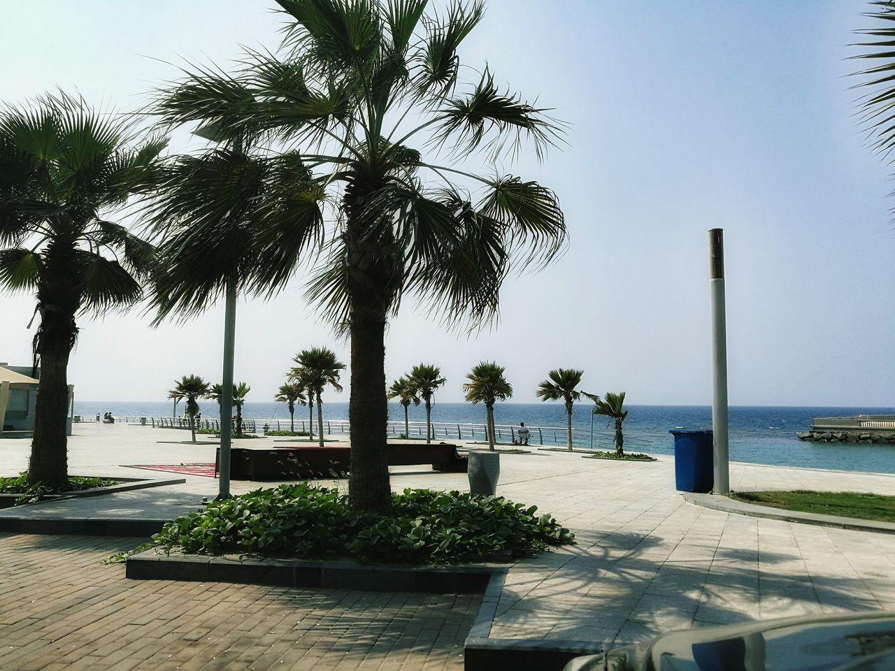 Palm Tree Sea Travel Beach Water Relaxation Summer Sunlight Vacations Tree Nature Sky Luxury First Eyeem Photo Jeddah Jeddah City Jeddah Beach Jeddah😍❤️ Jeddah Morning❤ Jeddah North Corniche || كورنيش جدة الشمالي KSA Ksa😍 Saudi Arabia