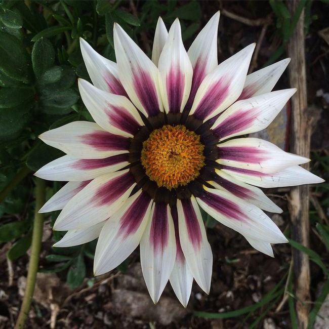 El ojo de Dios EyeEm Best Shots EyeEm Nature Lover Flowerporn Nature_collection