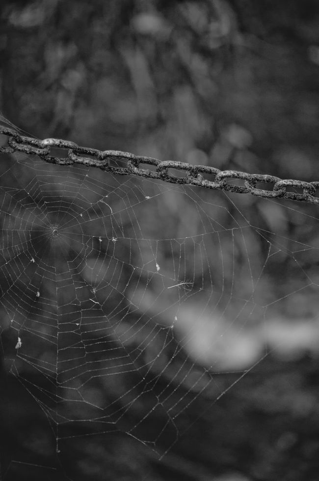 Beauty In Nature Close-up Complexity Day Focus On Foreground Fragility Monochrome Nature No People Outdoors Spider Spider Web Web
