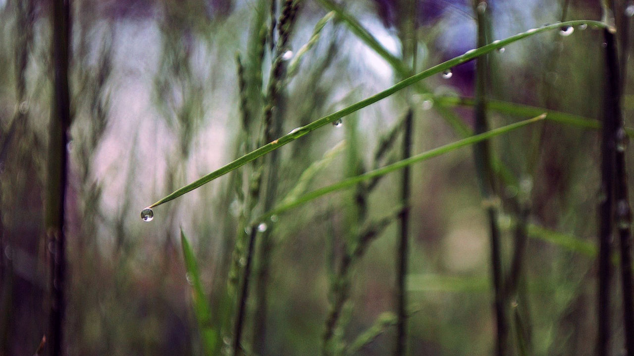 Beauty In Nature Close-up Day Drop Focus On Foreground Fragility Freshness Grass Grass Green Growth Nature No People Outdoors Plant Water Wet Wild