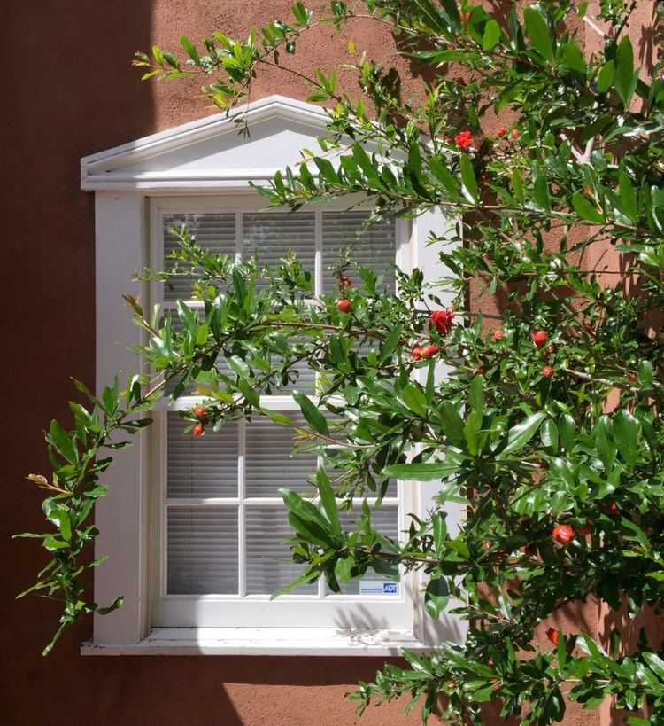 Window White Flowers Bush Wall Urban Photography Old Town Albuquerque Green Leaves Red Flowers Stucco Earth Colors