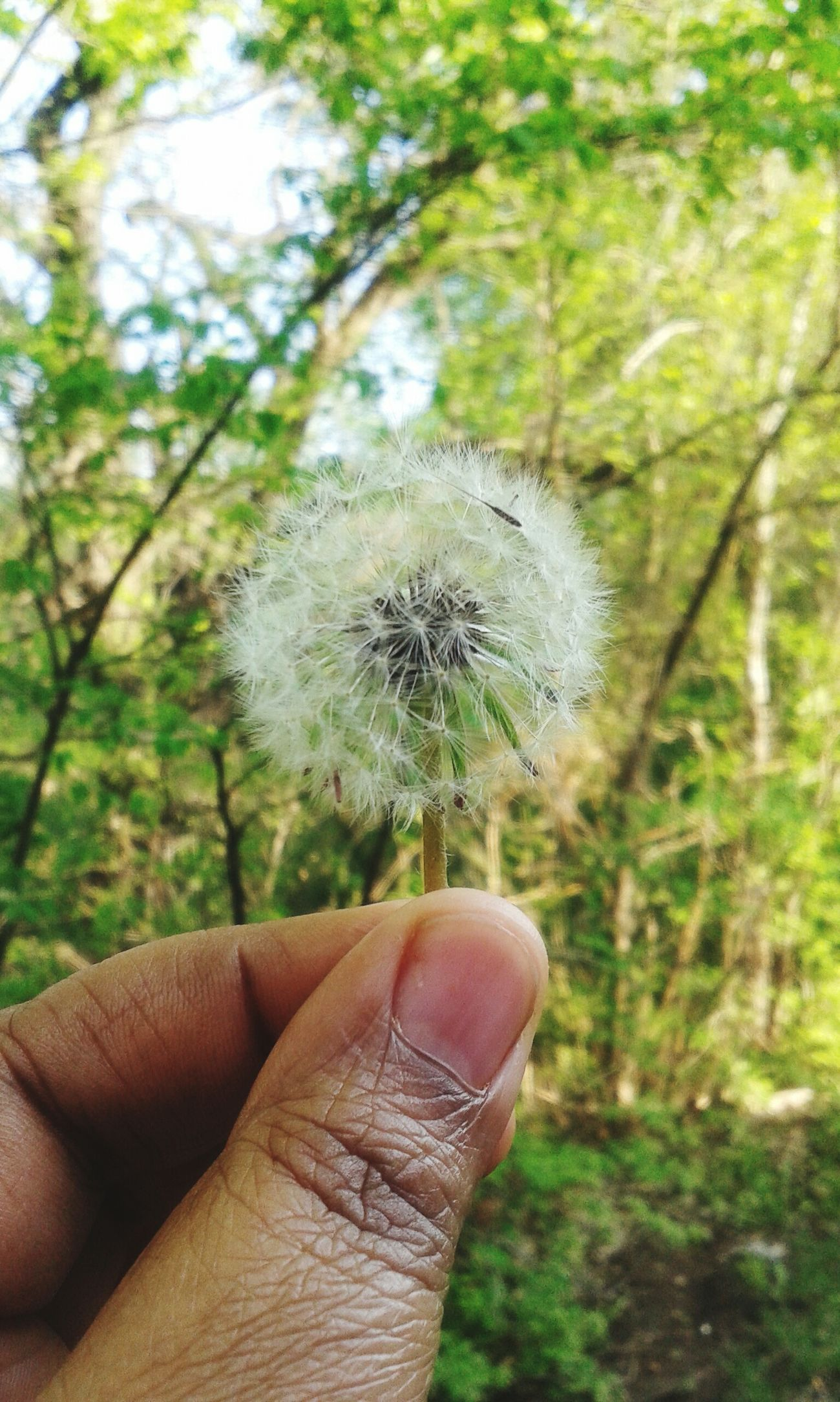 I wish... Dandelion Wishflowers AfroFlower