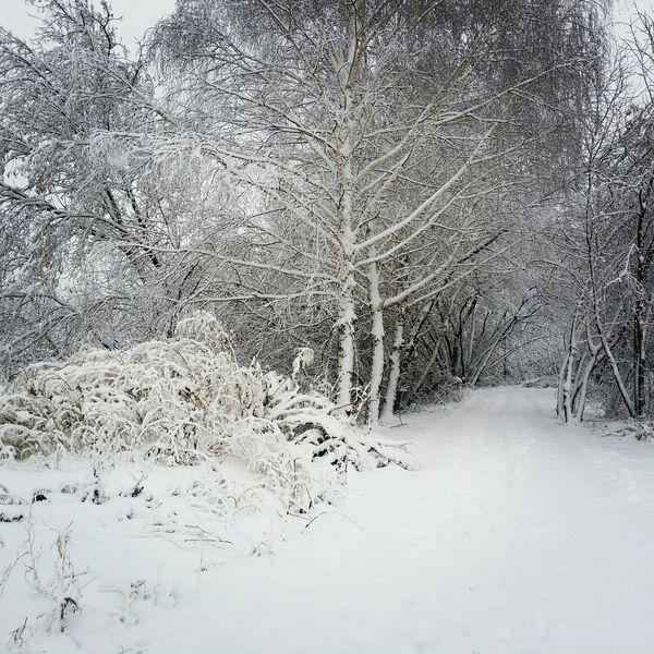 Зима пришла Novosibirsk