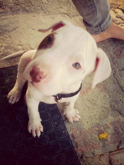 Villa Corona Hello World Animal Love Dogs
