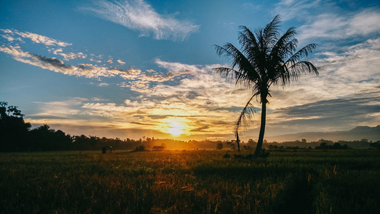 Beauty In Nature Blue Coconut Tree Day EyeEmNewHere Grass Landscape Morning Morning Sky Morning Sun Nature No People Outdoors Scenics Sky Sun Sunbeam Sunlight Sunrise Tranquil Scene Tranquility Tree