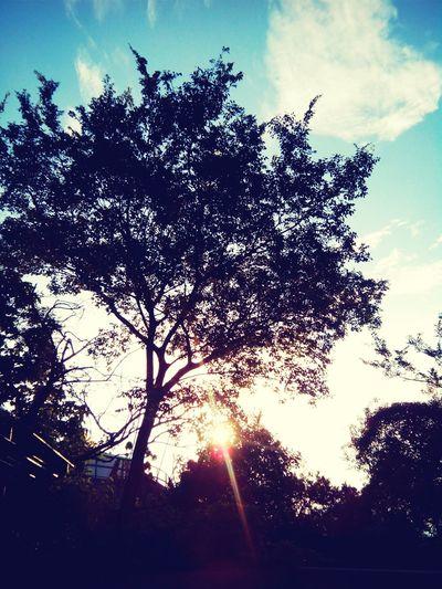 lovely morning ...... Sunshine Tree Heart Cloud