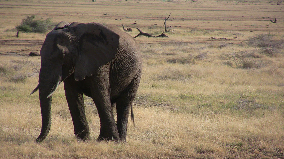 Beautiful stock photos of elephant, Animal Themes, Animals In The Wild, Day, Elephant