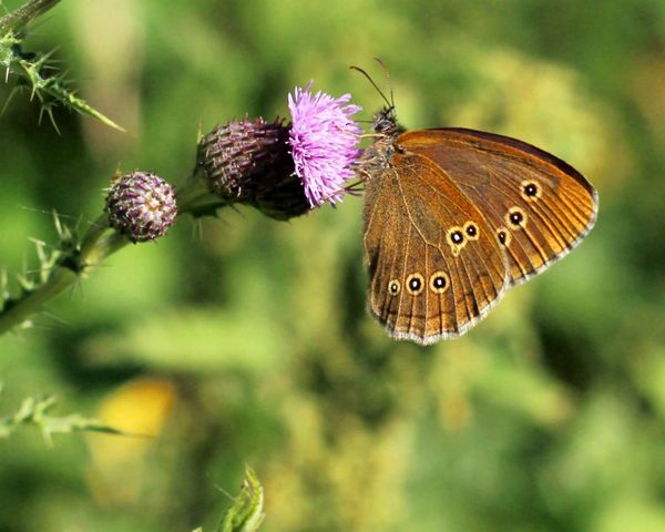 Butterfly. Butterfly - Insect Insect Animals In The Wild Close-up Nature One Animal No People Animal Themes Outdoors Beauty In Nature Day Freshness Beauty In Nature EyeEmNewHere EyeEm Nature Lover Eye4emotions