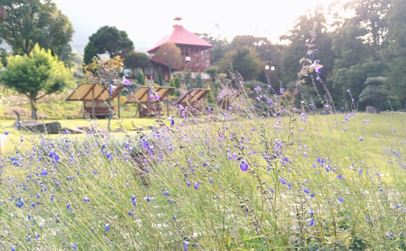 Enjoying The Sun Picking Flowers  Nature Garden Herbs Japan Selective Focus Sunset The Great Outdoors - 2016 EyeEm Awards Flowers Meditation