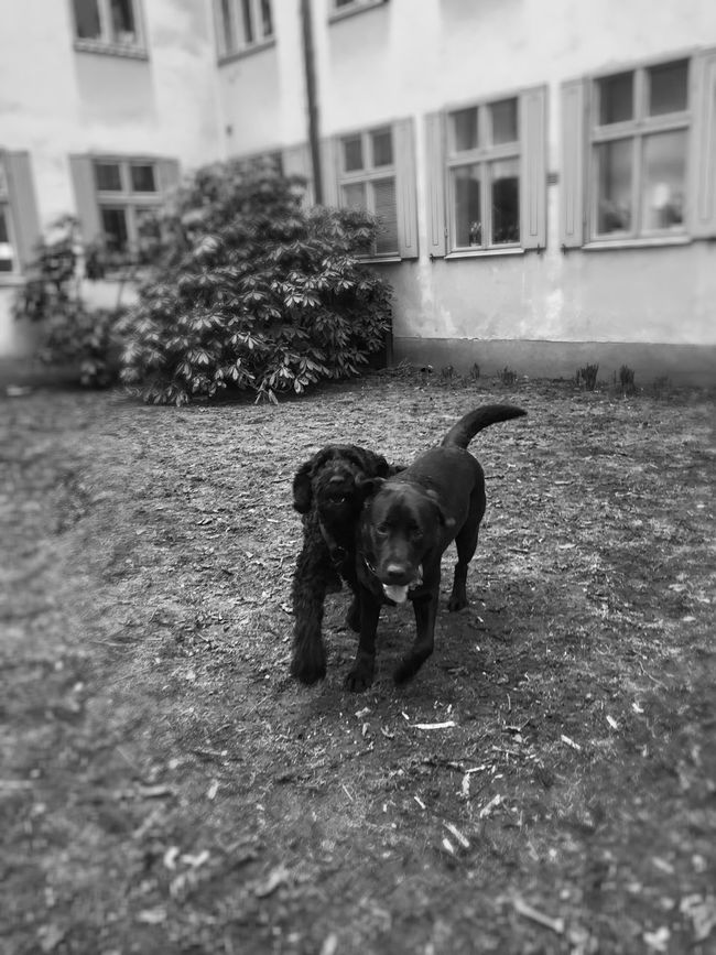 Dogs Black And White