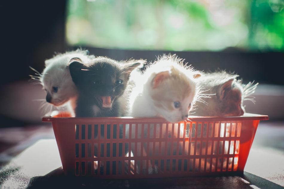 Beautiful stock photos of baby katzen,  Animal Themes,  Basket,  Black,  Close-Up
