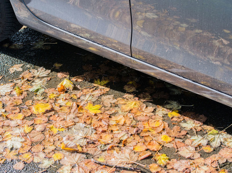 Autumn leaves on the street Autumn Autumn Colors Autumn Leaves Avenue Caution Country Road Driving Traffic Autumn Mood Car Damp Danger Danger Of Slipping Dangerous Foliage Leaf Leaves Mushy Outdoors Safety Season  Slippery Smooth Transportation Wet