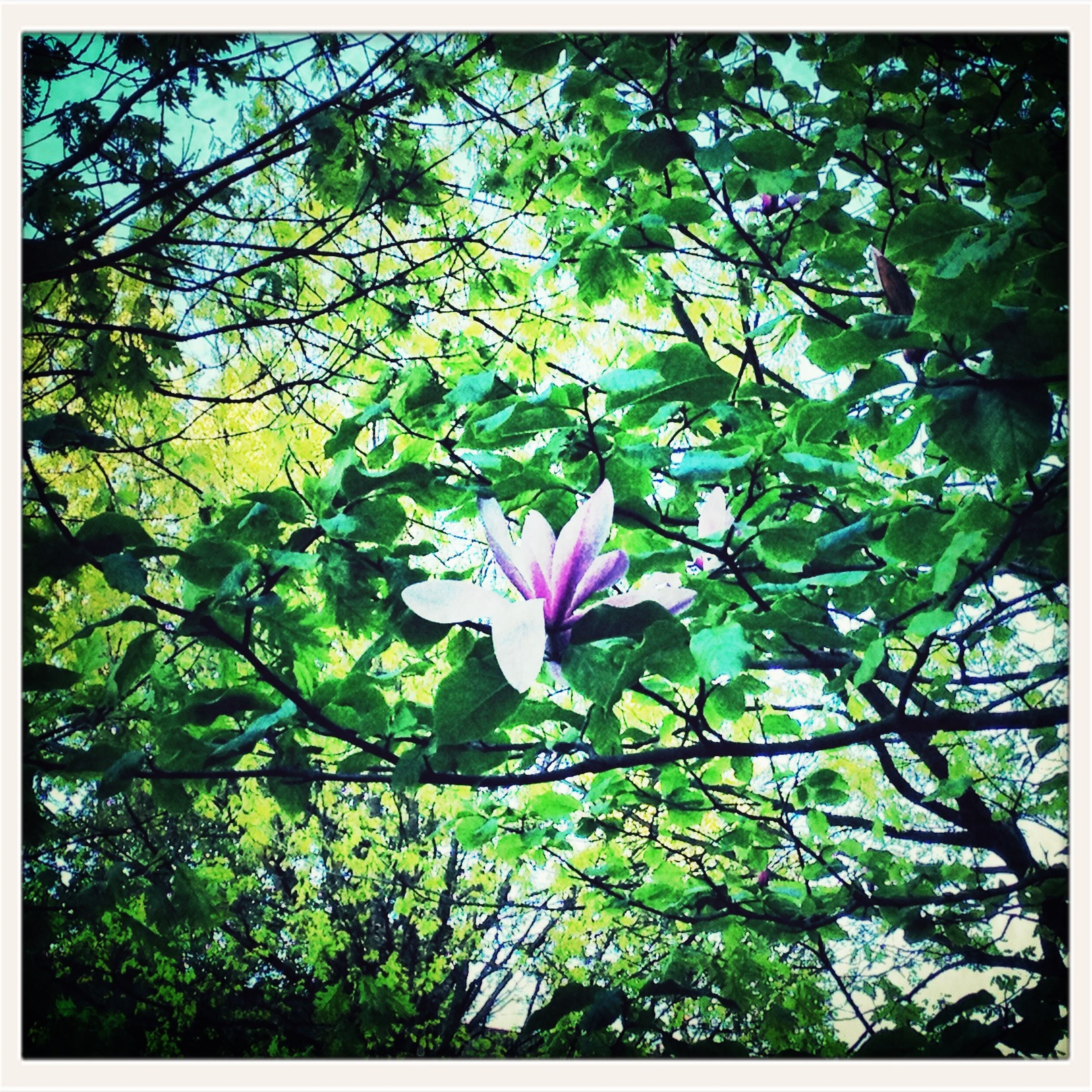 flower, growth, transfer print, freshness, branch, tree, beauty in nature, leaf, nature, auto post production filter, fragility, green color, blossom, petal, pink color, low angle view, blooming, day, outdoors, plant