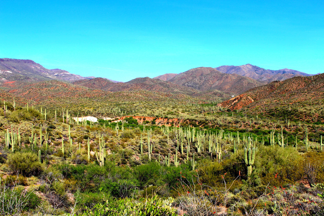 Arizona Cacti Arizona Spring Arizona Tea AZ Beauty AZ Cacti AZ Conservation Cacti Mounti Cactus Cactus Land Cave Cave City, Ky Cave Creek Colorful Desert Desert Beauty Desert Cactus Desert Life Gr Green Hike AZ Saguaro Saguaro Cacti Saguaro Cactus Spur Vibrant Cac Vibrant Desert