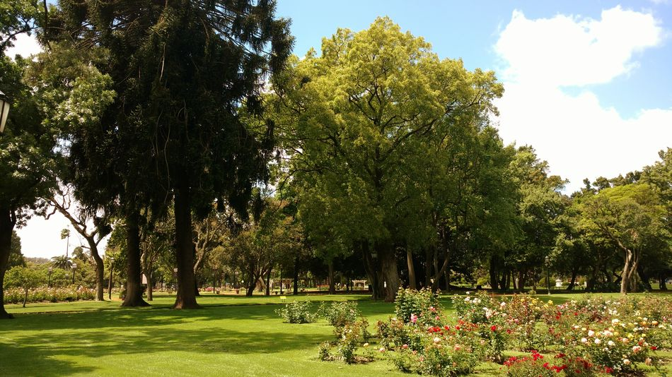 Rosedal Buenos Aires Nature Photography