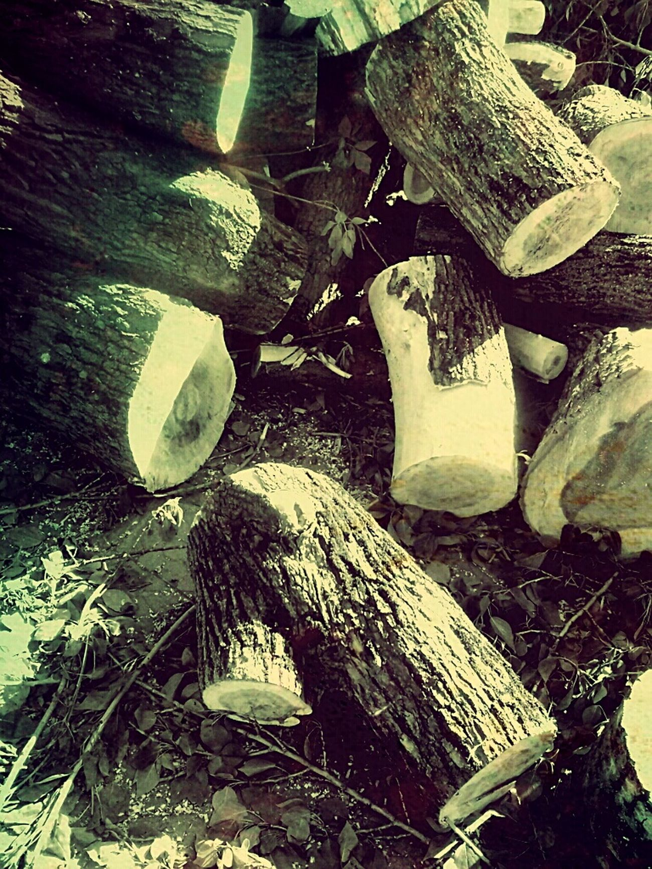 древесина поленья