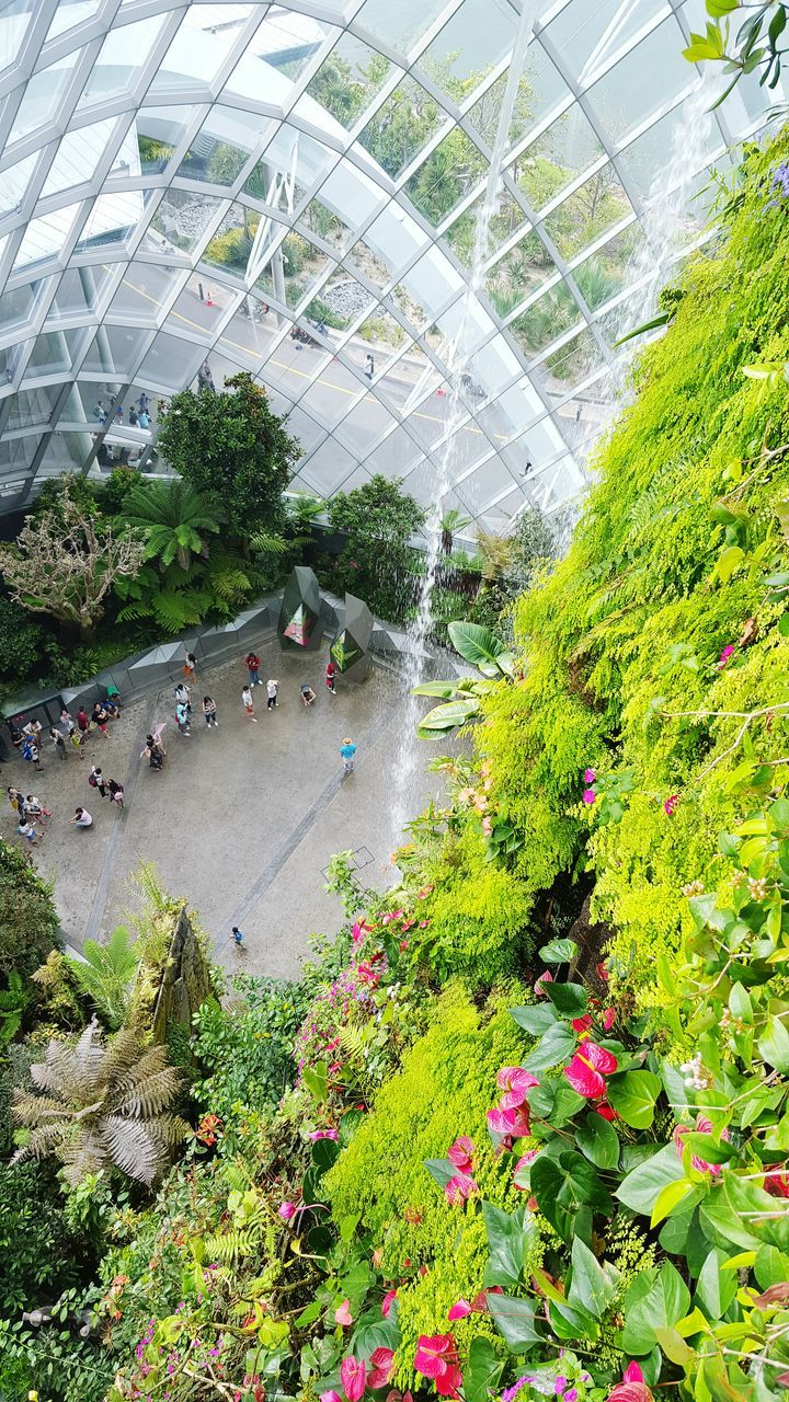 plant, growth, greenhouse, green color, architecture, day, built structure, plant nursery, nature, leaf, tree, indoors, no people, beauty in nature, flower