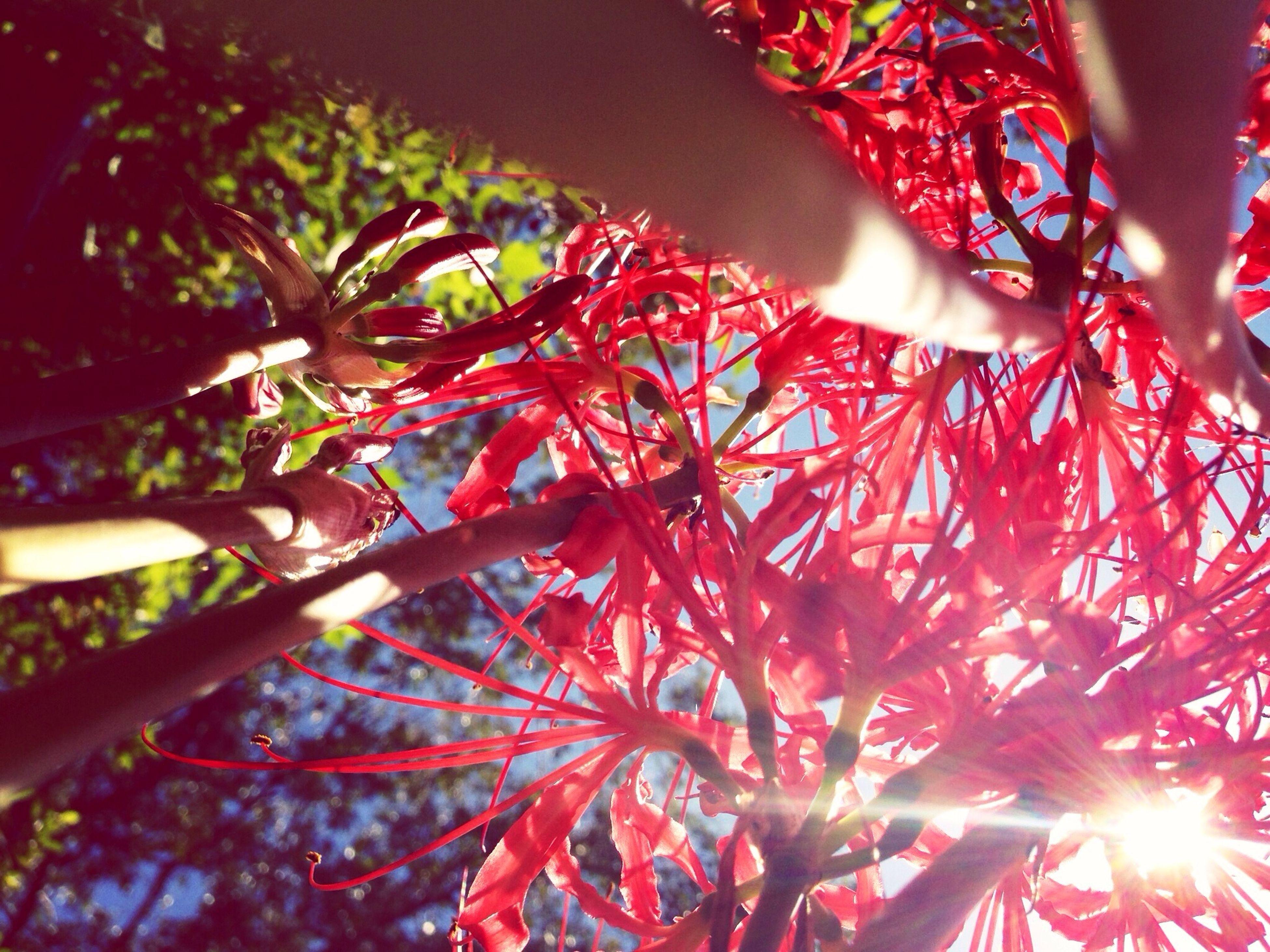 EyeEm Nature Lover Flowerporn A Bug's View Cluster Amaryllis