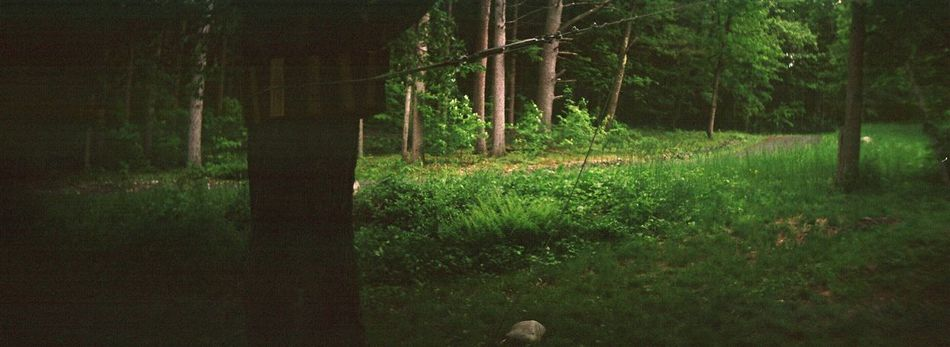 Tree Nature Forest Tree Trunk No People Country Life Film Sprocket Rocket Panorama Outdoors Koduckgirl
