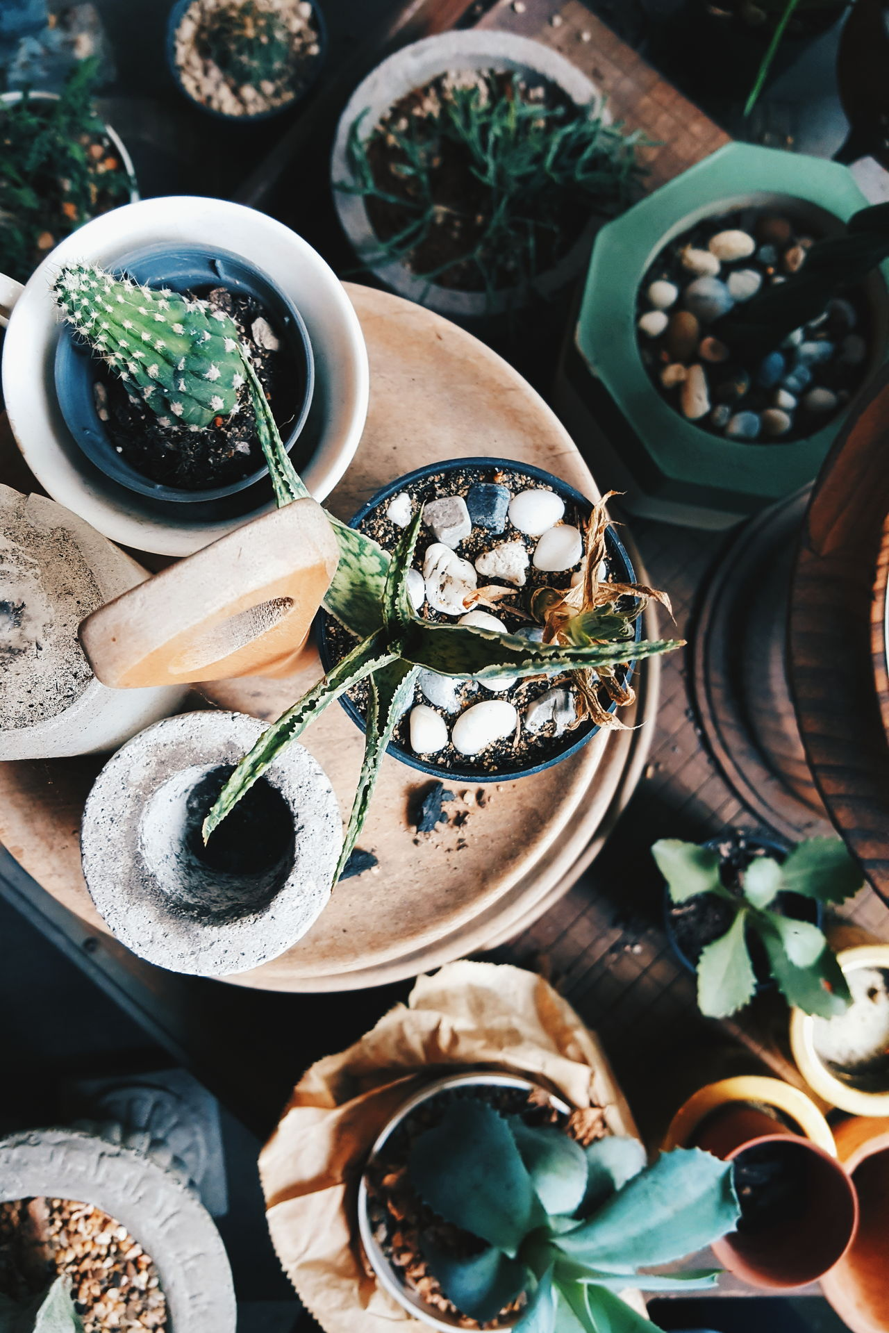 Christmas Food Cultures No People Indoors  Mood Hipster Plants Pots Garden Bokeh Cool Top Flat Lay Vase VSCO