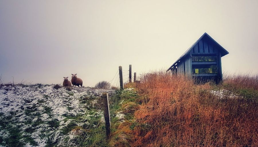 kiek/look What I Saw Sheep Queries House No People Outdoors Architecture Day Nature Sky
