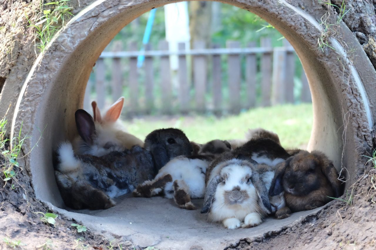 Animal Themes Domestic Animals Mammal Pets Domestic Cat No People Day Nature Outdoors Rabbits Rabbit ❤️ Beauty In Nature Cute Pets Cute Animals