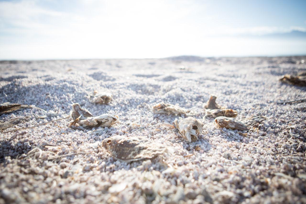 Fish bones on the shore of the heavily polluted Salton Sea, California. Beach Bones California Close-up Day Ecological Ecology Fish Fish Bones Nature No People Outdoors Pollution Salton Sea Sand