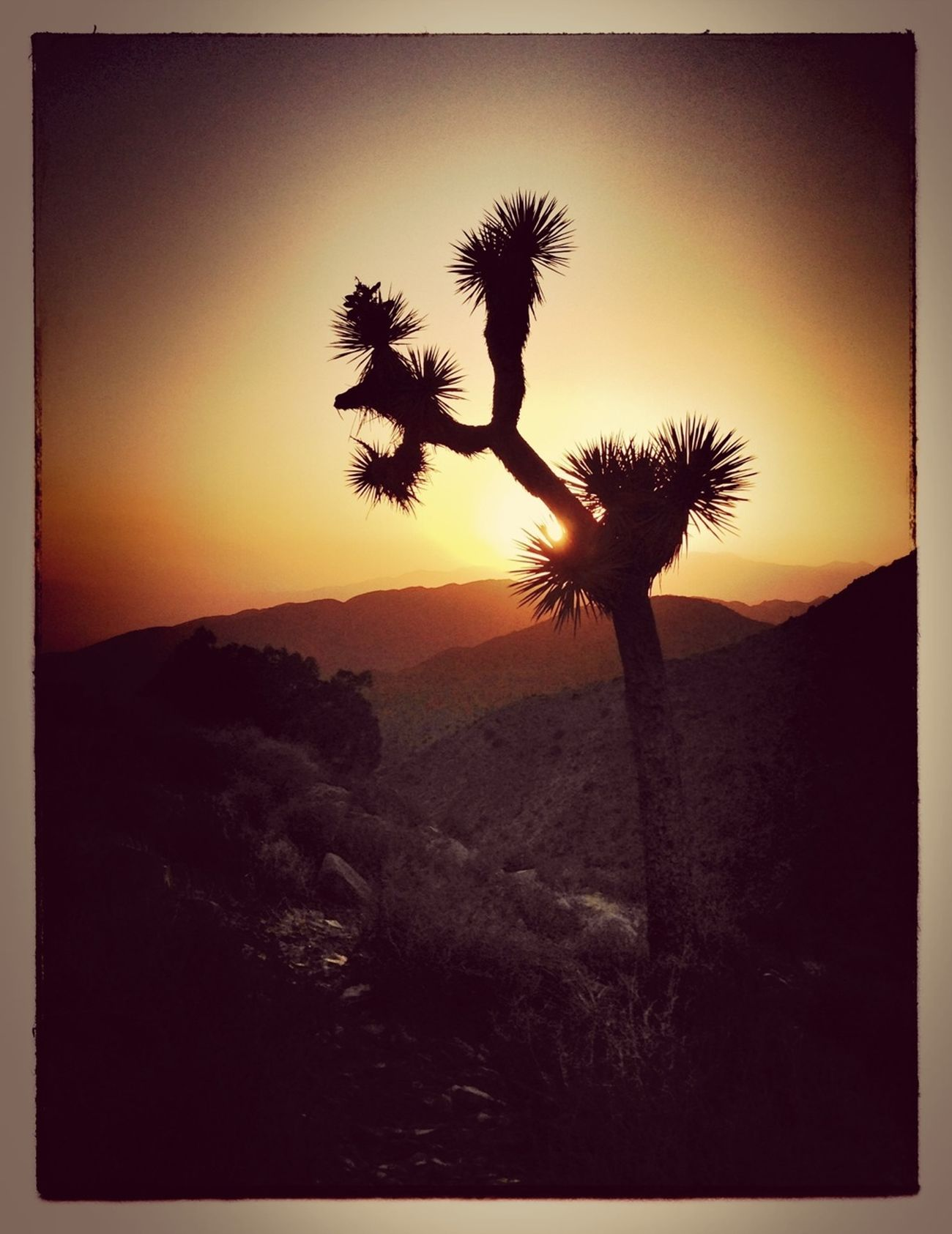Sunset Joshua Tree Life Is A Highway High Desert