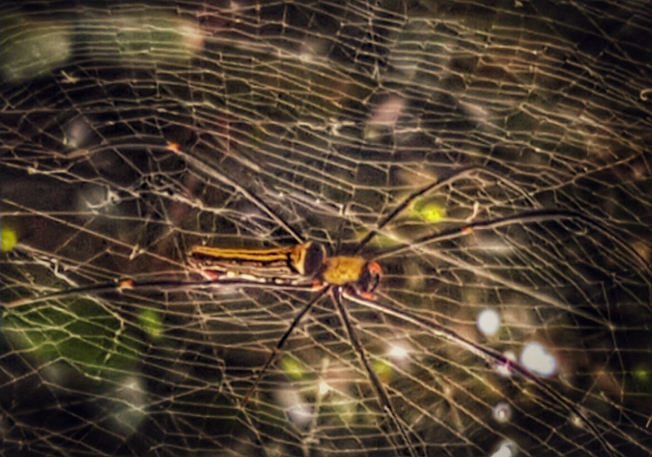 Spiderworld Nature Photography Nature Amimal Theme Outstanding View Eye4photography  My Year My View Insect Photography Spidernet