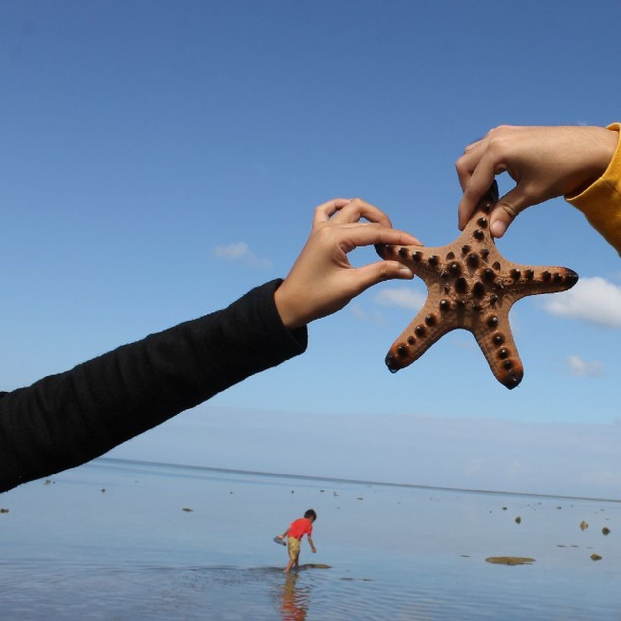 reach for it and then make a wish Thestarpart2 Docusinthesand Unscripted loveSanFrancisco 🎥 Star Sea Sand Beach Starfish  Catch Day Province Life U Philippines Horizon Kid Rural