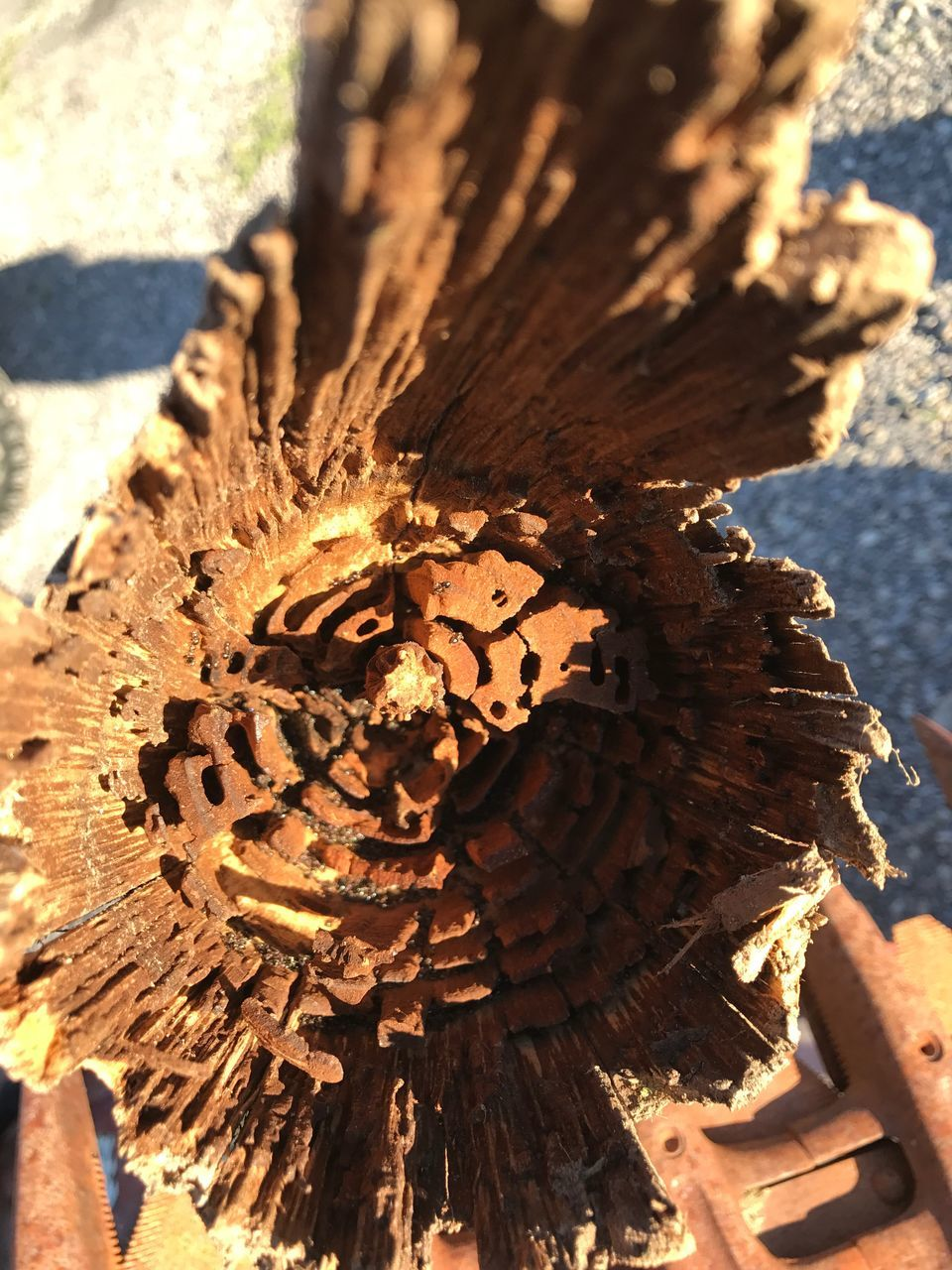 wood - material, sunlight, close-up, no people, outdoors, day, nature, tree stump