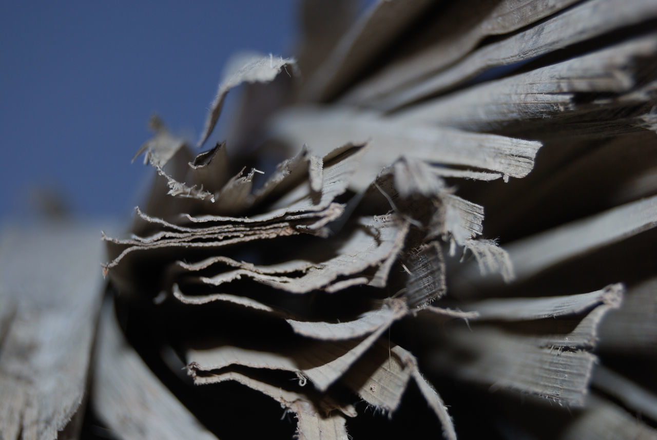 Close-up Day Focus On Foreground Fragility No People Outdoors Paper Paperwork EyeEmNewHere
