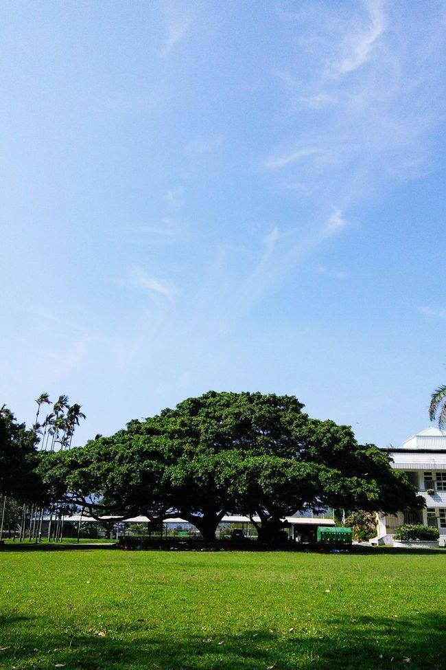 School Campus Sunny Day Tree Enjoying Life