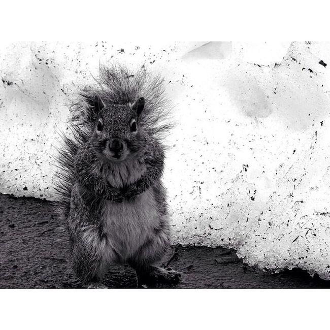 Newyork Newyorkcity NYC Sony Sonyhx50 HX50 Snow CentralPark Cute Squirrel Wildlife