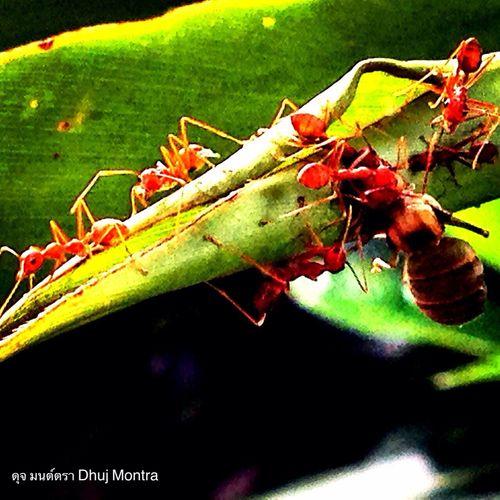 Ants (at Nakhonratchasima Thailand)