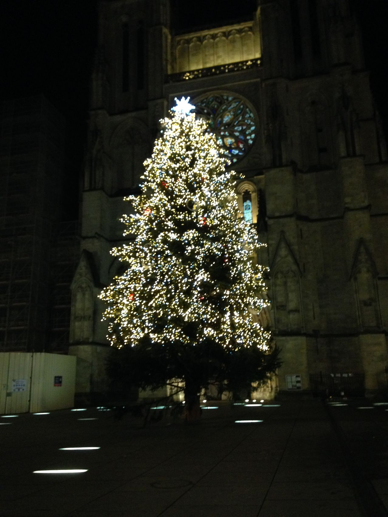 Arbre De Noël Sapin De Noël Noël Joyeux Noël Bordeaux Hôtel De Ville Hôtel De Ville Bordeaux