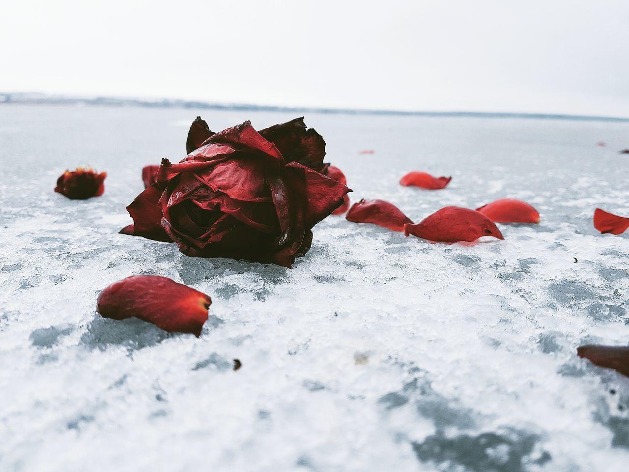 First Eyeem Photo Nature Frozen Ecosystem  Day
