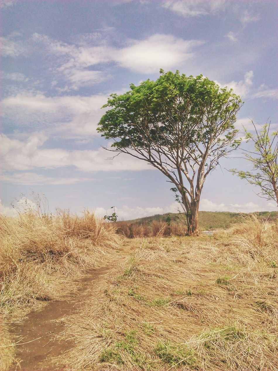Tenang Gili Petelu Pantai Pohon Beach