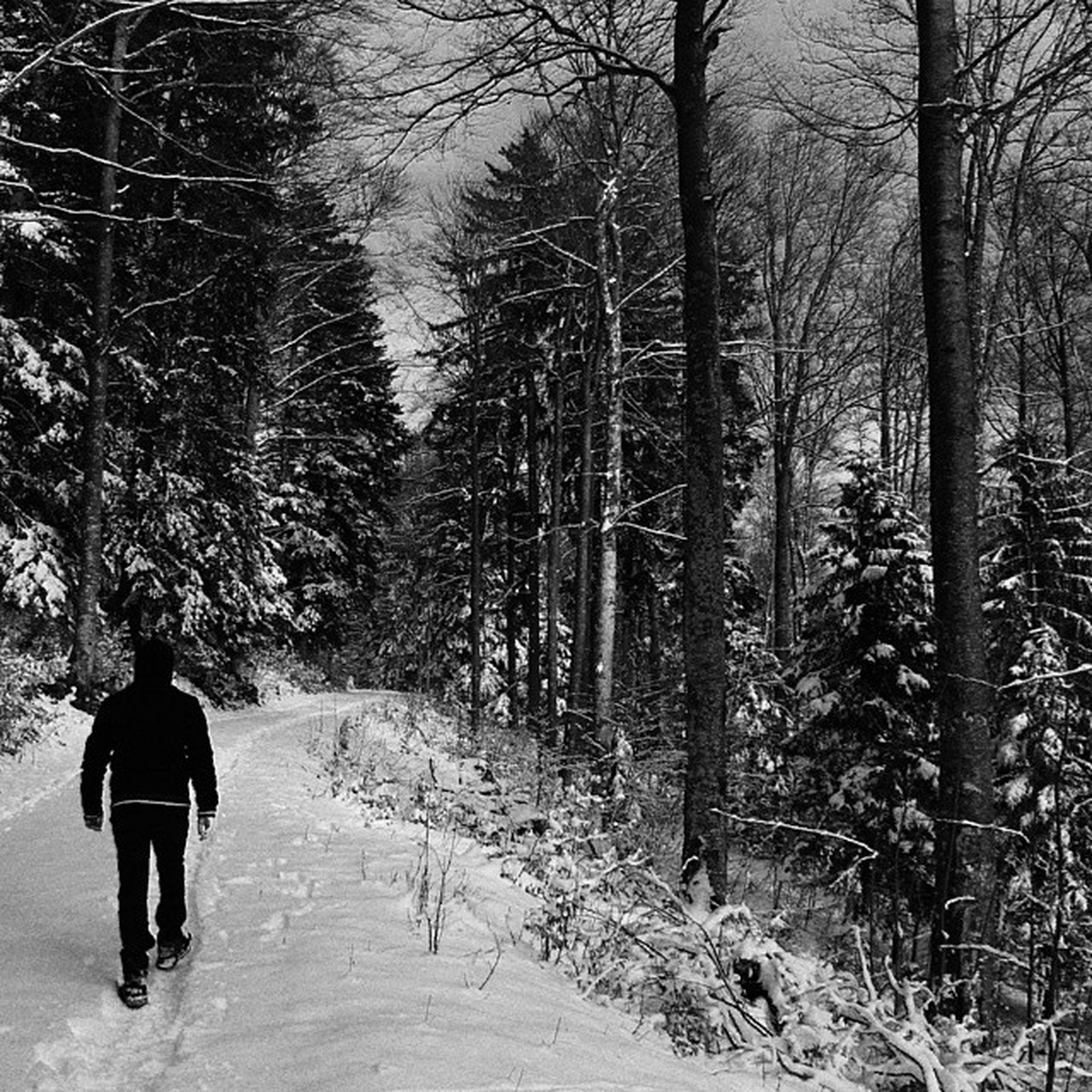 tree, rear view, walking, full length, lifestyles, leisure activity, winter, men, forest, cold temperature, snow, season, bare tree, nature, tranquility, tree trunk, tranquil scene, the way forward