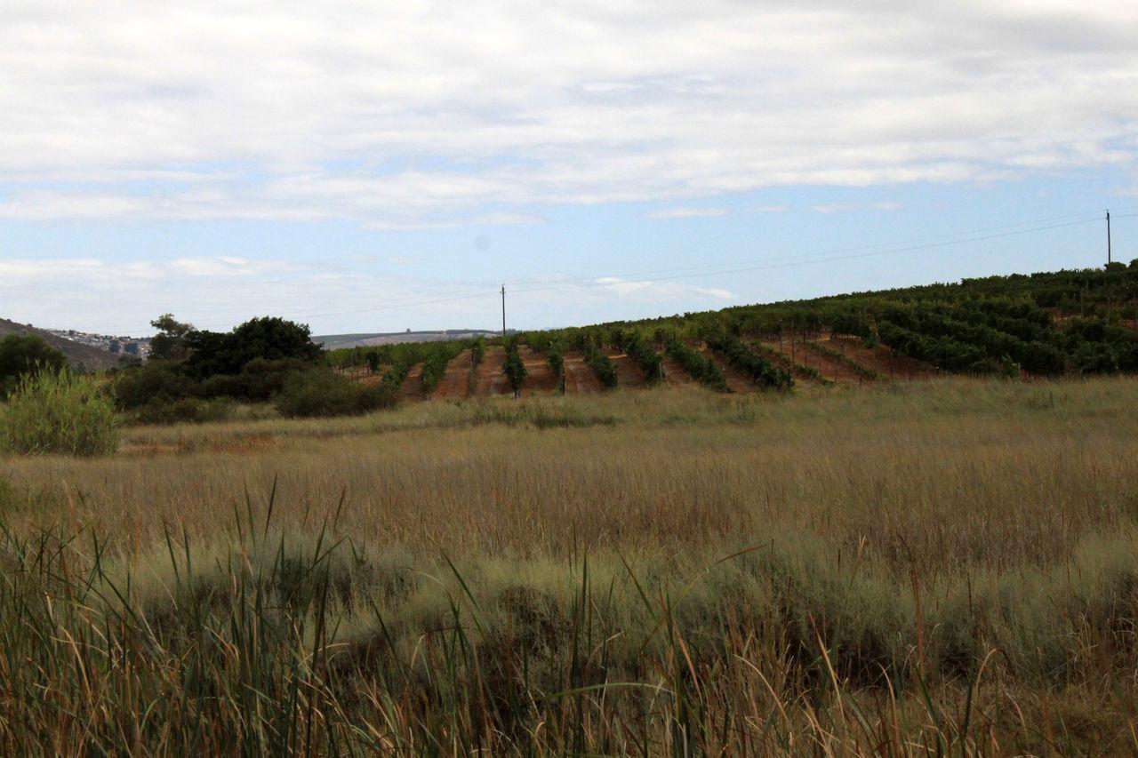 Agriculture Landscape_Collection Landscape_photography Lush Foliage Stellenbosch The Cape Vinyards Viticulture Wine Farm Winelands