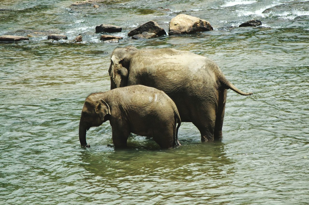 Elephant ♥ Inthewild Aroundtheworld Taking Photos Nikon D3100