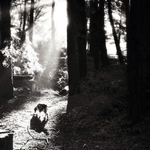 Redwoods, GG Park