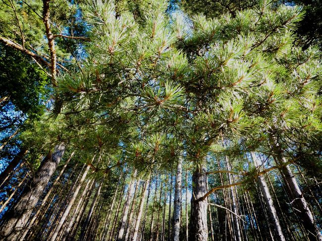 Colour Of Life Walking In The Woods Hugging A Tree Pinetrees Chilling Relaxing Enjoying Life in Mitrovo Polje Open Edit