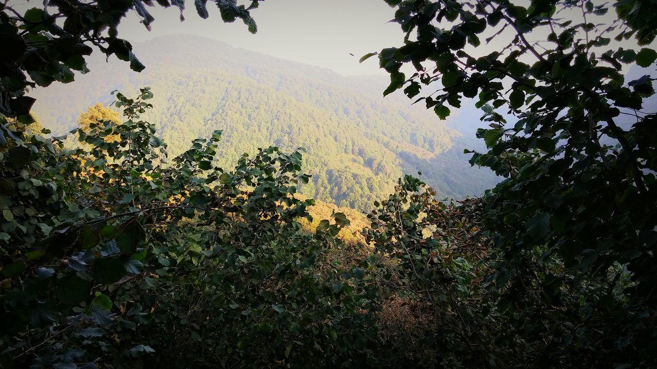 Dağ Tas Fındık Orman Yeşillik Doğalyaşam Doğa Like Follow Good
