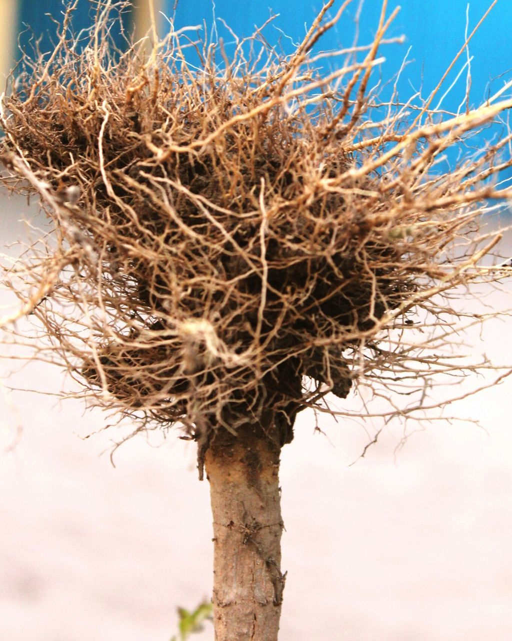 no people, day, nature, outdoors, dried plant, sky, close-up, beauty in nature, bare tree, branch