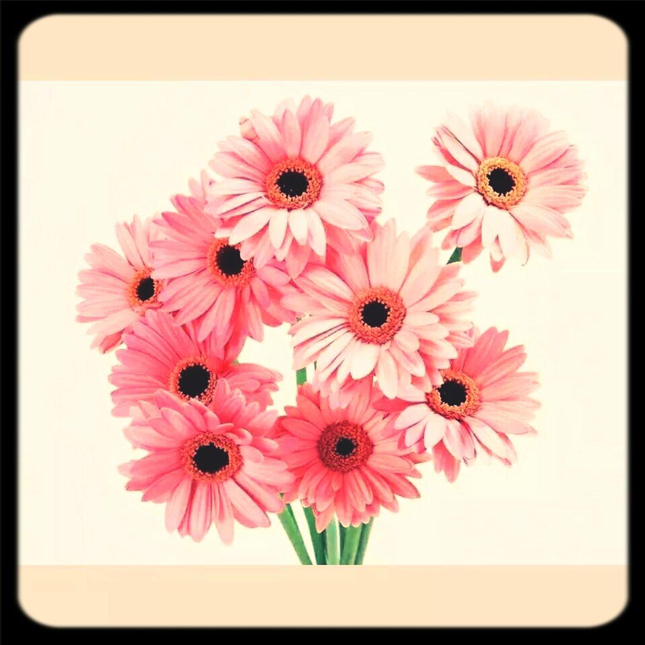 flowers First Eyeem Photo