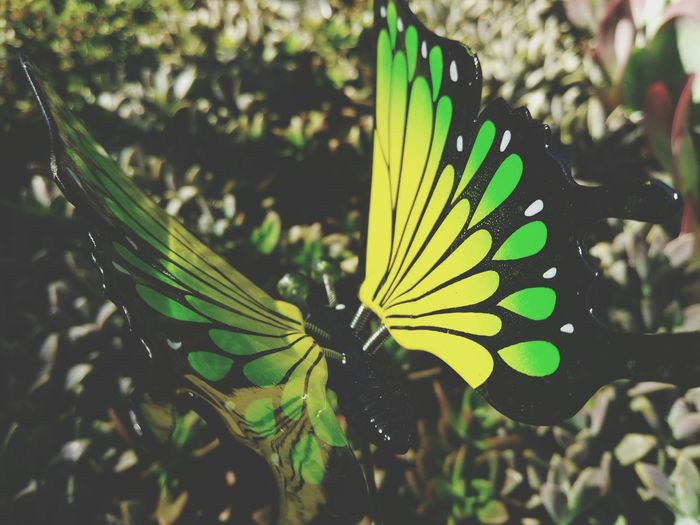 Green Butterfly Insect Animal Themes Animals In The Wild Close-up Nature One Animal Beauty In Nature Butterfly - Insect Animal Wing Animal Wildlife Green Color Plant Outdoors No People Leaf Multi Colored Day Fragility Butterfly ❤